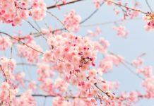 【クルーズ旅行春夏秋冬】春のクルーズ旅行といえば!国内クルーズ&海外クルーズのすすめ